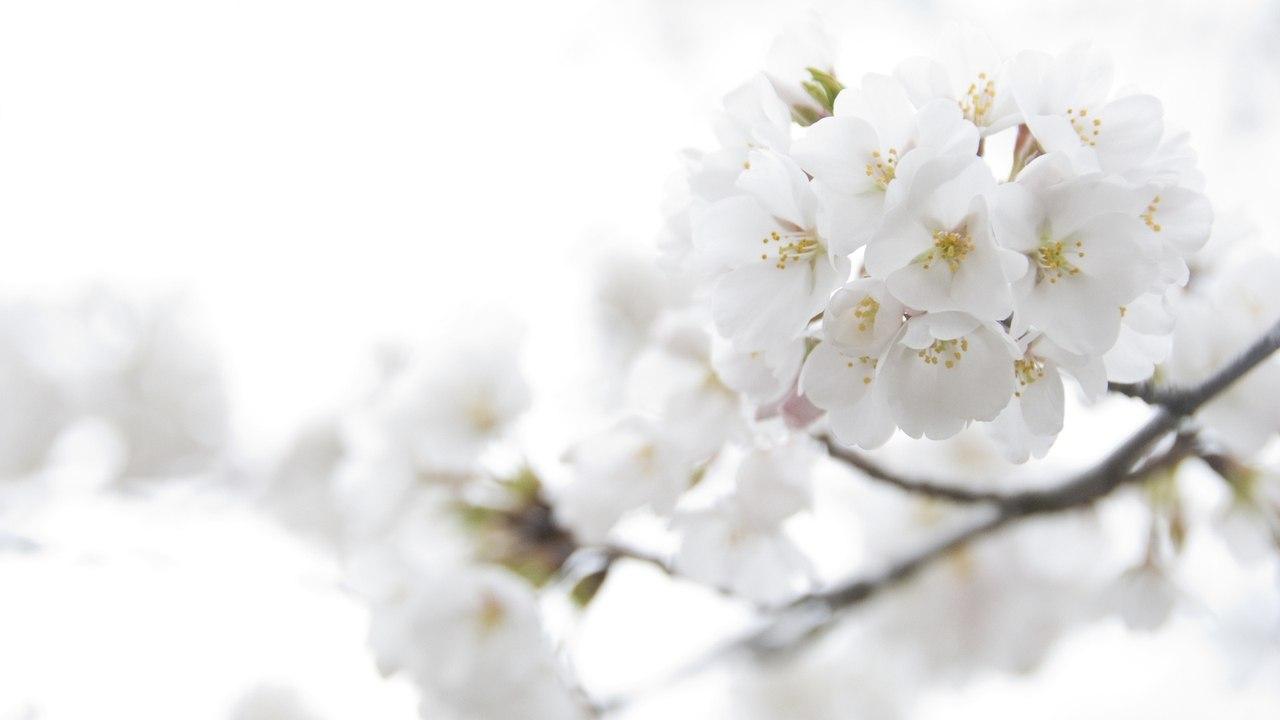 Белые цветы картинки 4
