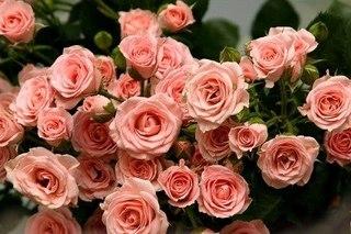"""Оригинал схемы вышивки  """"букет роскошных роз """" ."""
