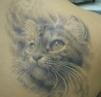 Сколько экземпляров татуировок кошечки...  Вероятно, это так же одна из самых...