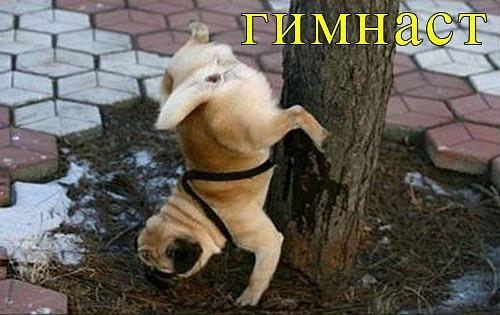 РЕЛАКСАЦИЯ))))) - Страница 5 X_251b98fa