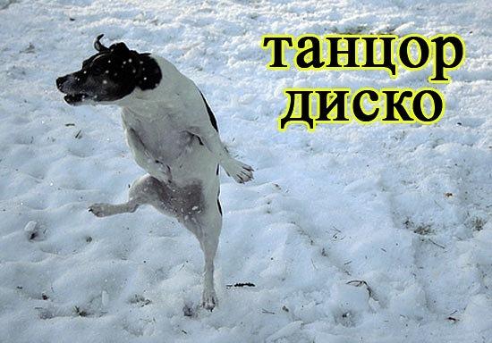РЕЛАКСАЦИЯ))))) - Страница 5 X_55fe29dc