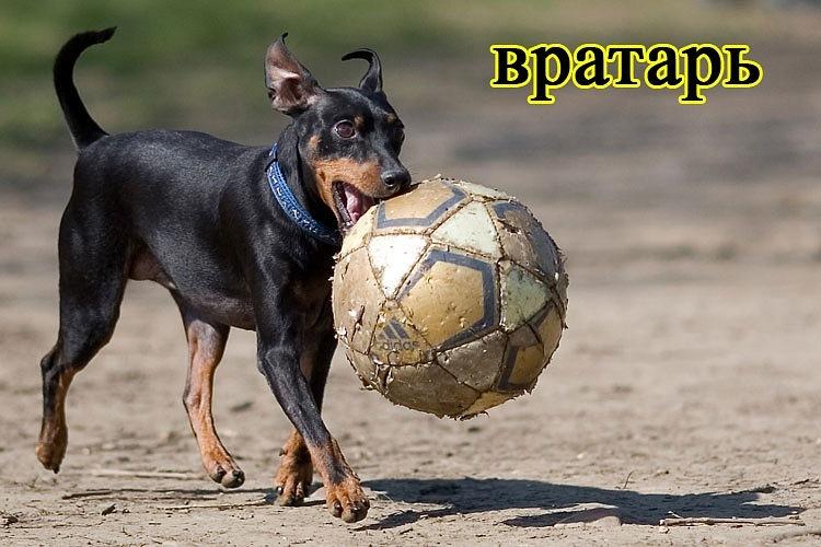 РЕЛАКСАЦИЯ))))) - Страница 5 Y_1afff253