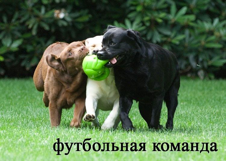 РЕЛАКСАЦИЯ))))) - Страница 5 Y_6cff1ba1