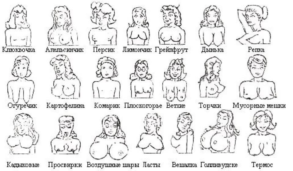 Типы женских грудей в фото 1 фотография