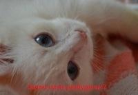 Кристиночка Малюкова, 2 сентября , Новотроицк, id167685846