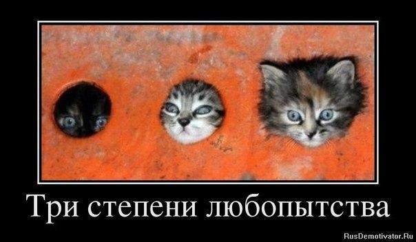 http://cs11032.vk.me/v11032783/a72/CcWGci-ZFH4.jpg
