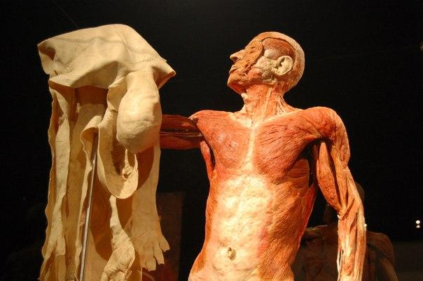 руководство по пластинации или новая технология изготовления анатомических препаратов