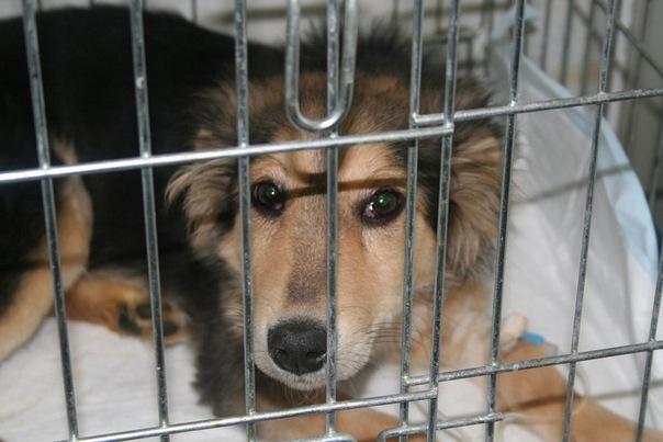 Скорая помощь животным приюта «Дубовая Роща»  44bb3342db956