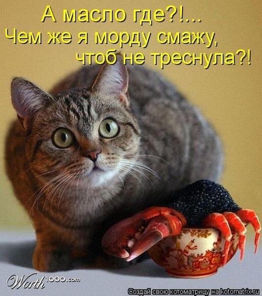 http://cs11064.vkontakte.ru/u138729050/138641379/x_e670082d.jpg