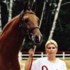 Донские лошади - Гордость  России