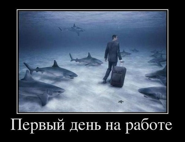 http://cs11069.userapi.com/v11069292/6d3/4Eww0W-0Smg.jpg