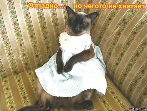 http://cs11074.vkontakte.ru/u14627555/129968184/x_b1973261.jpg