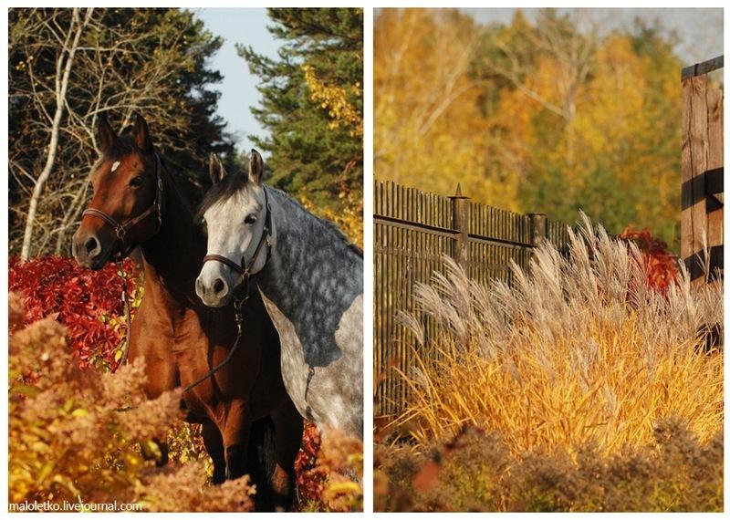 Картинки осень лошади