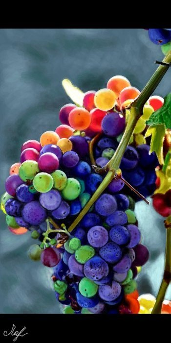 Живое граффити виноград