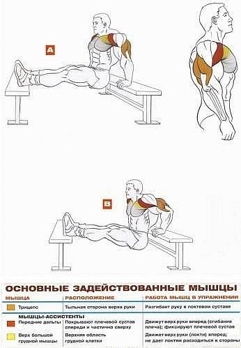 Упражнения накачки мышц домашних условиях