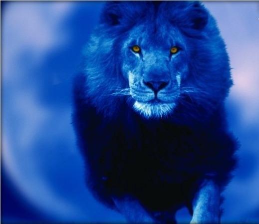 Львы ...