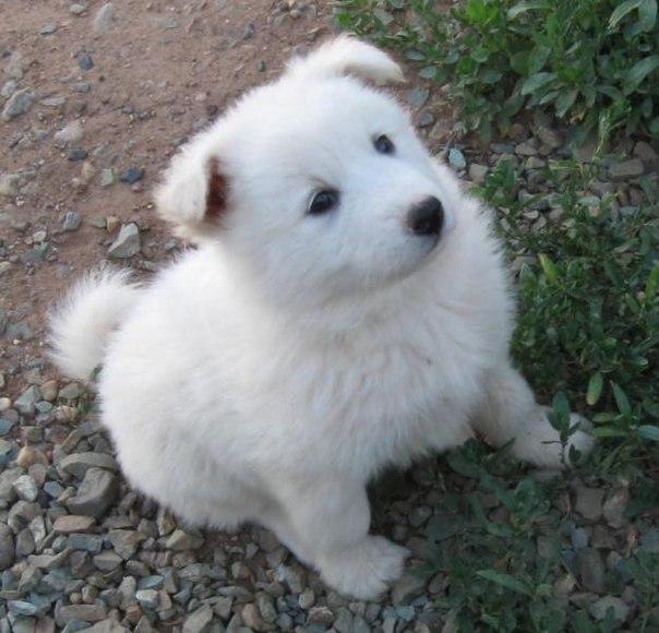 Все породы собак с классификацией по группам FCI, общение владельцев...