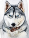Приму в дар или куплю недорого щенка лайки