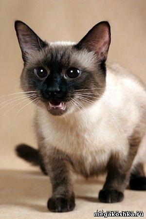 http://www.laini.ru/cat tai/7.jpg.
