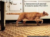Данил Смирнов, 20 мая 1998, Кумертау, id69064996