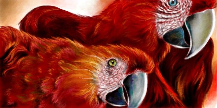 Живое граффити красные попугаи