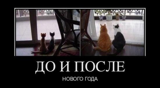 http://cs11156.vkontakte.ru/u15160508/-14/x_07401741.jpg