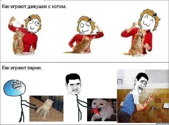картинки аниме парней котов: