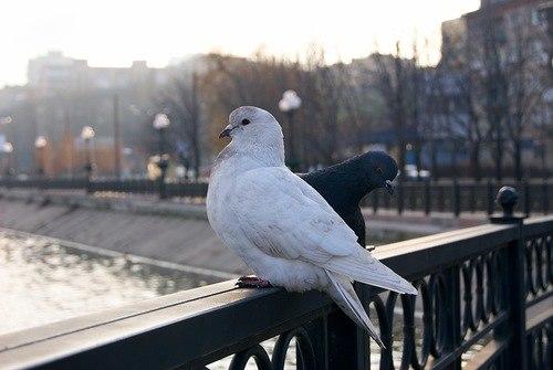 Михаил Бразас, Санкт-Петербург - фото №25