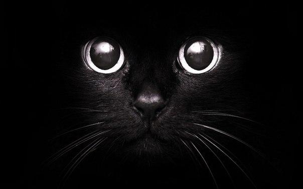 Самые красивые потрясающие черно