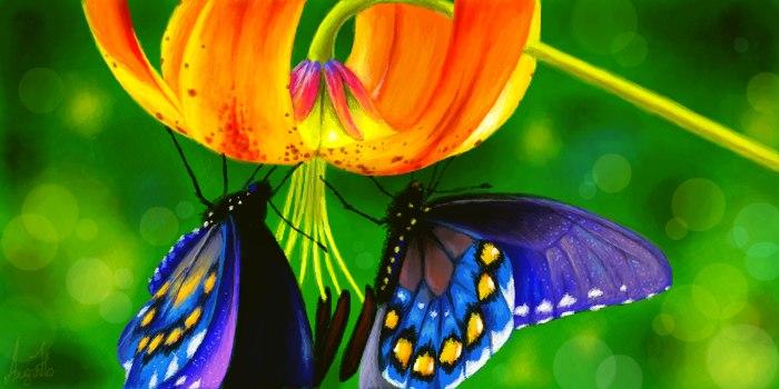 Живое граффити бабочки