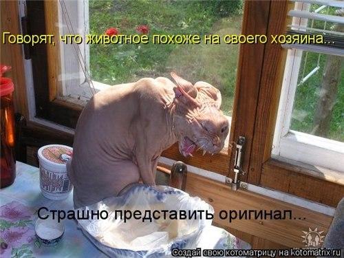 РЕЛАКСАЦИЯ))))) - Страница 5 QY-NVOrJ6LQ