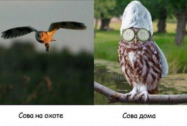 Комикcы OPTH-LzjHJc