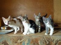 Найденные коты в краснодаре