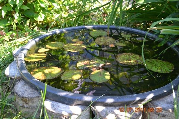 Декоративный пруд - Страница 42 - Форум садоводов Твой Сад