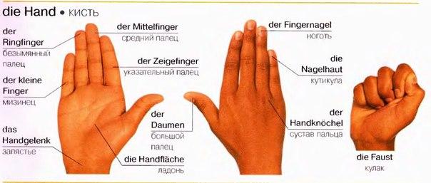 Рука на немецком