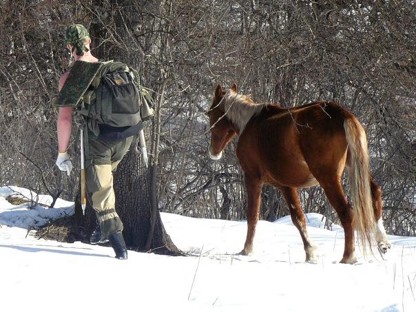 Лошадь и альпинист