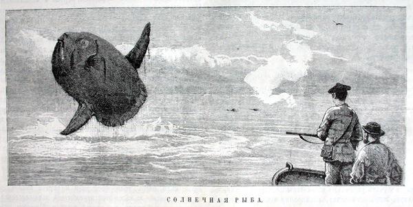 Кузькин бать. уу..какая рыбка бывает..оказывается.  18.03.2012 - 15:46.