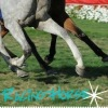 «Racing Horse»