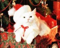 Кристина Дятел, 28 декабря , Элиста, id143438132