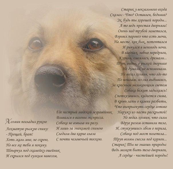 Стихи о собаках. - Страница 3 X_c966c5fb
