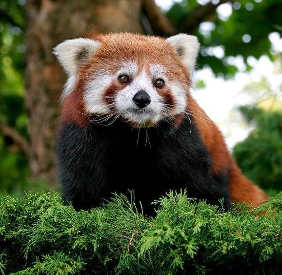 Самые милые животные мира