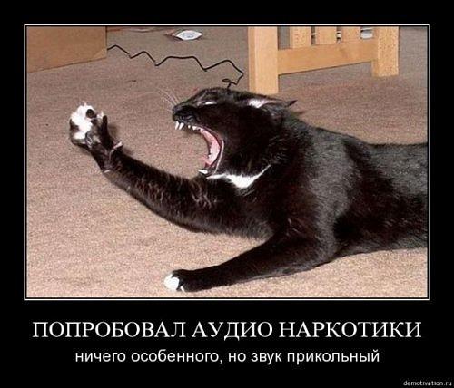 http://cs11285.vkontakte.ru/u17048049/132277113/x_ef5b1bda.jpg