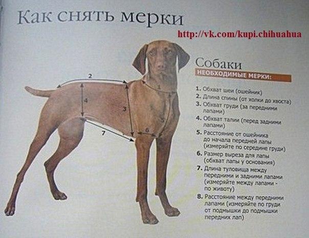 Выкройки и шаблоны для собак