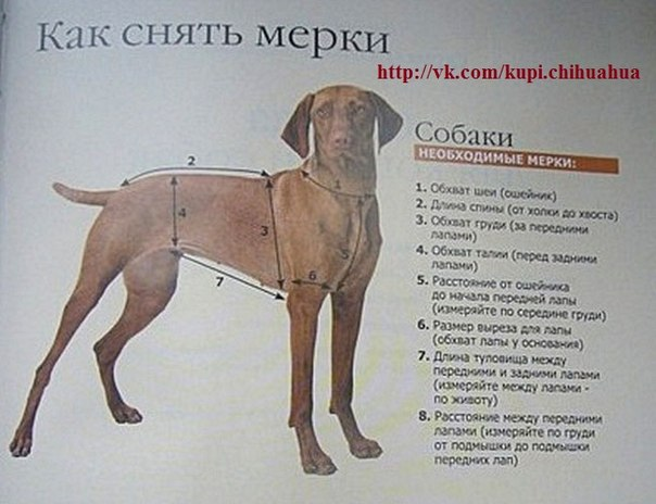 Ваша собака должна стоять!
