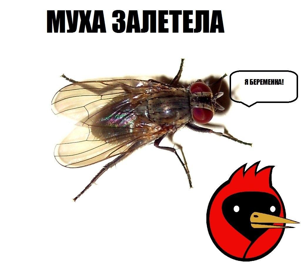 квартиры демотиватор мухи с одного нашего автосервиса оснащены