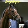 Барбаро-Конь Легенда
