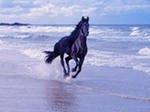 """Предпросмотр схемы вышивки  """"Лошадь """" ."""