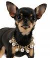 glamdog - одежда для собак