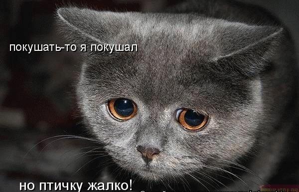 Рубрика.  Блог милого котика.