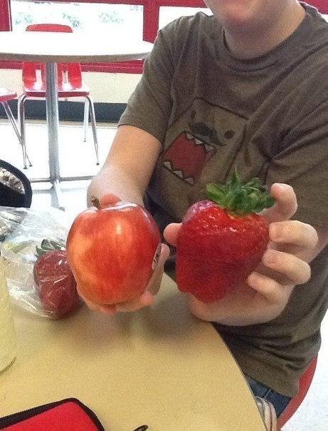 Самый крупный сорт яблока